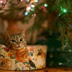 Идеи подарков к праздникам из Италии