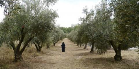 сад-монастыря-и-монахиня