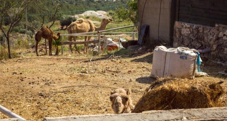 Сельский Израиль