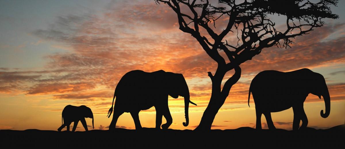 Рисуем слонёнка, или Воспитание достоинства