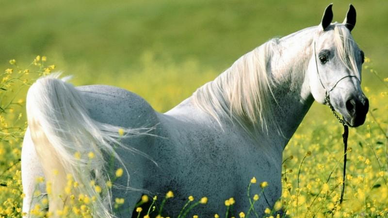 лошадка1