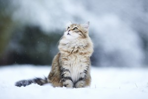 cat-kitty-snow-winter-koshka