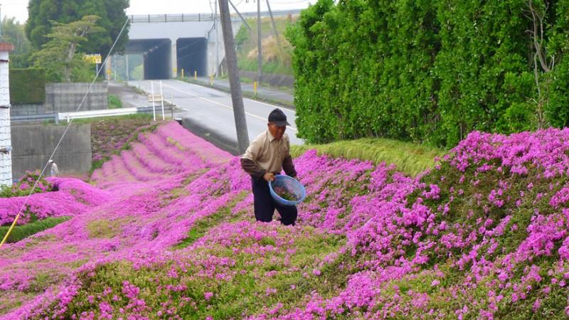 И тогда он начал сажать цветы.