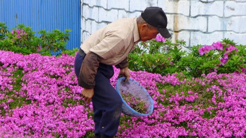 Он посадил тысячи цветов за два года.