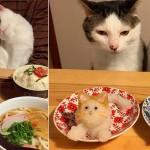 Коты следят за тобой (+Фото)