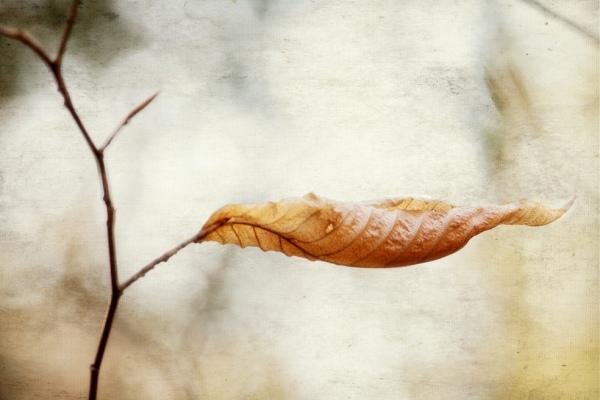 Осенний сплин и зимняя хандра
