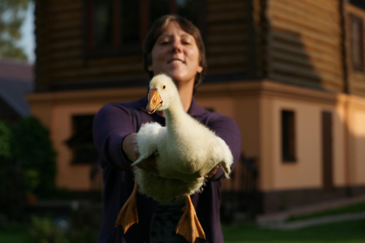 Записки из деревни: как москвичи гусей завели