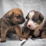 «Отдам в хорошие руки»: как найти животному дом