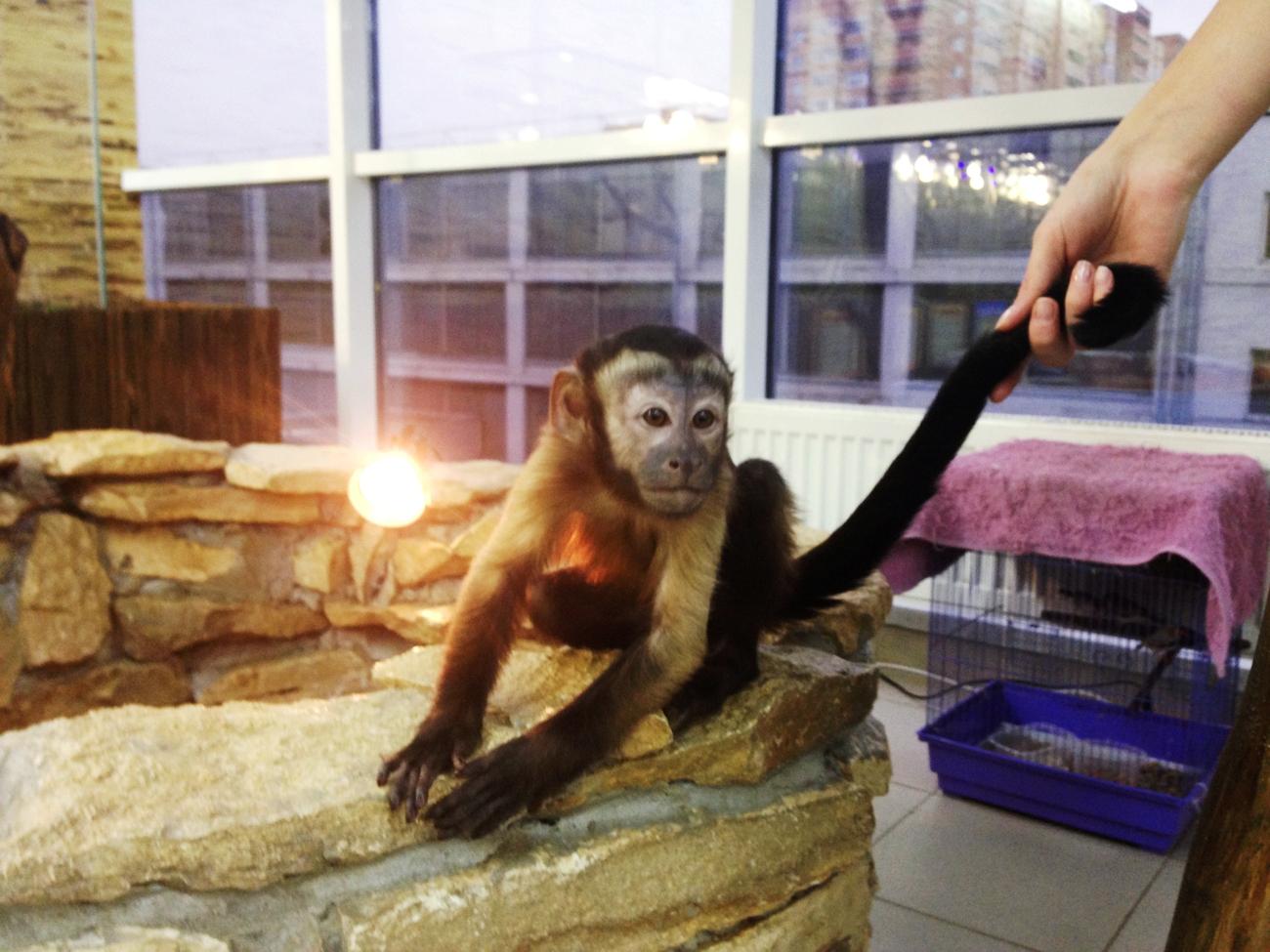 Принят закон о запрете жестокого обращения с животными