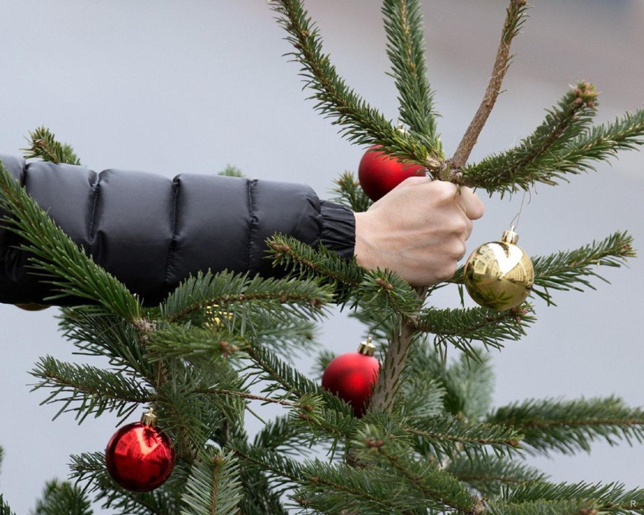Выкинь елку: в Москве и Петербурге производят сбор хвойных деревьев