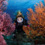 Открылась выставка подводных фотокартин «Женщина. Погружение»