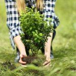 Посадить дерево — в память о малыше