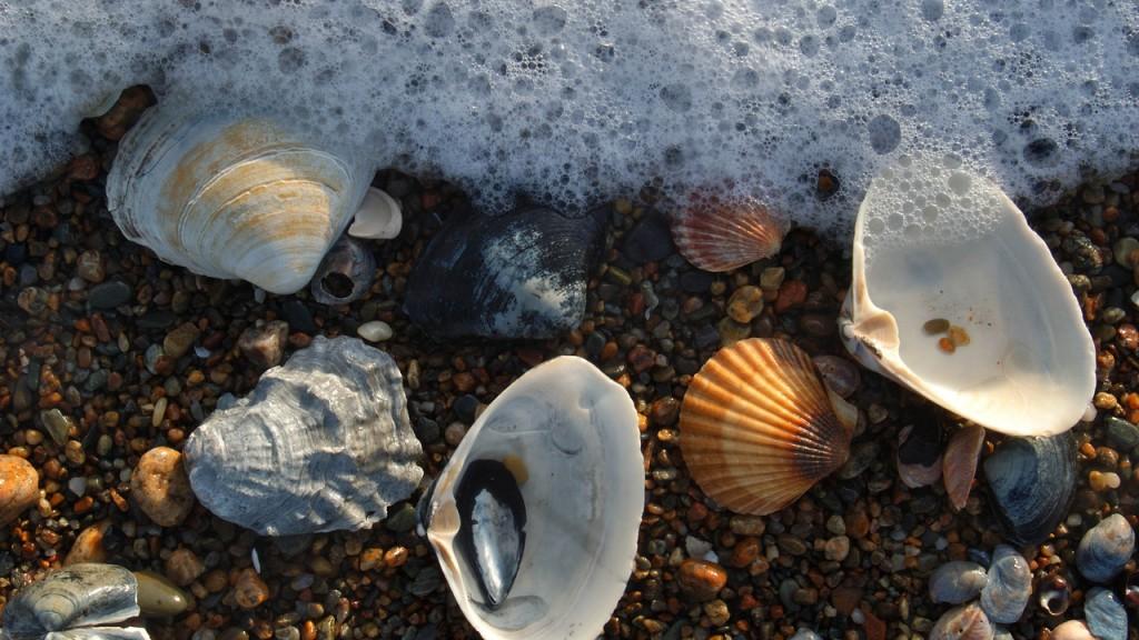 Солнце, воздух и вода! 10 летних развлечений на берегу