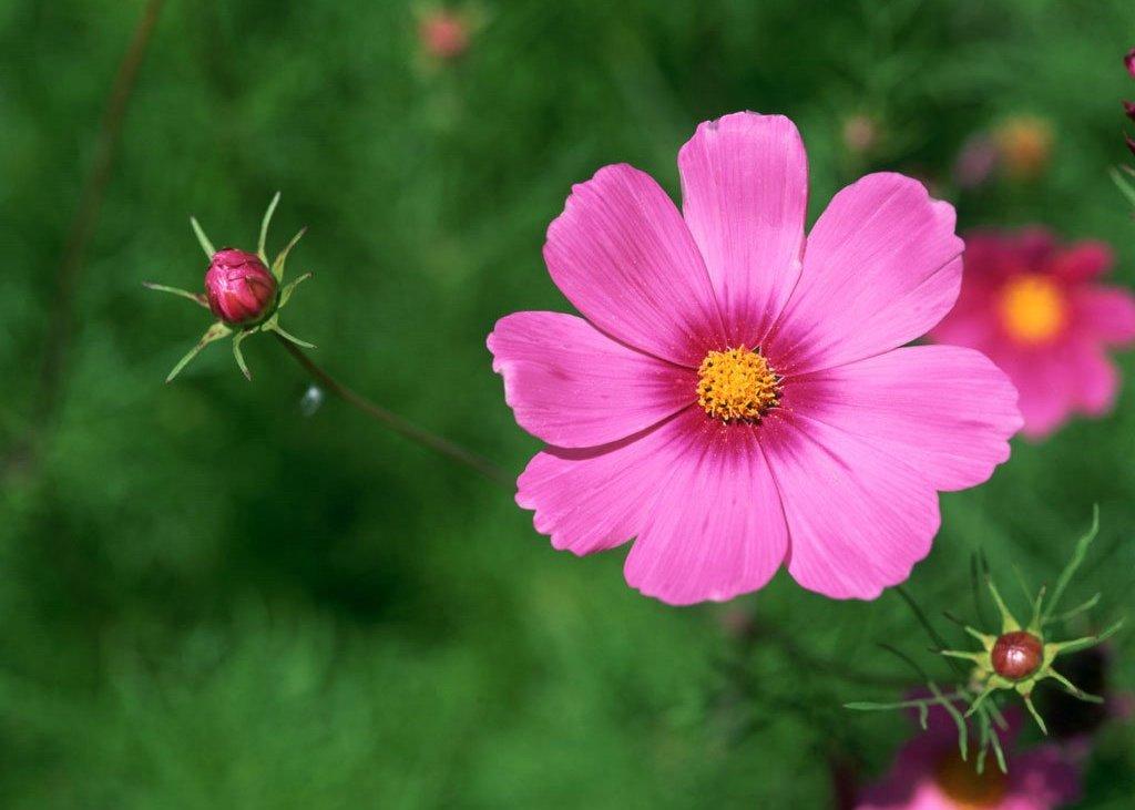 Фото цветы похожие на ромашки ...: pictures11.ru/foto-cvety-pohozhie-na-romashki.html