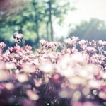 Парфюмерная музыка весны