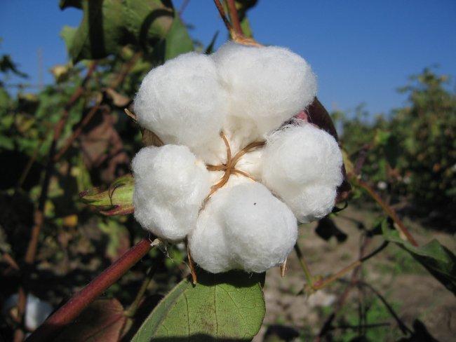 Натуральное лето - летние ткани задают тон