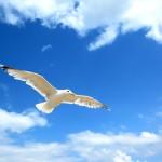 Как птица для полёта